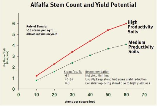 alfalfa2.jpg