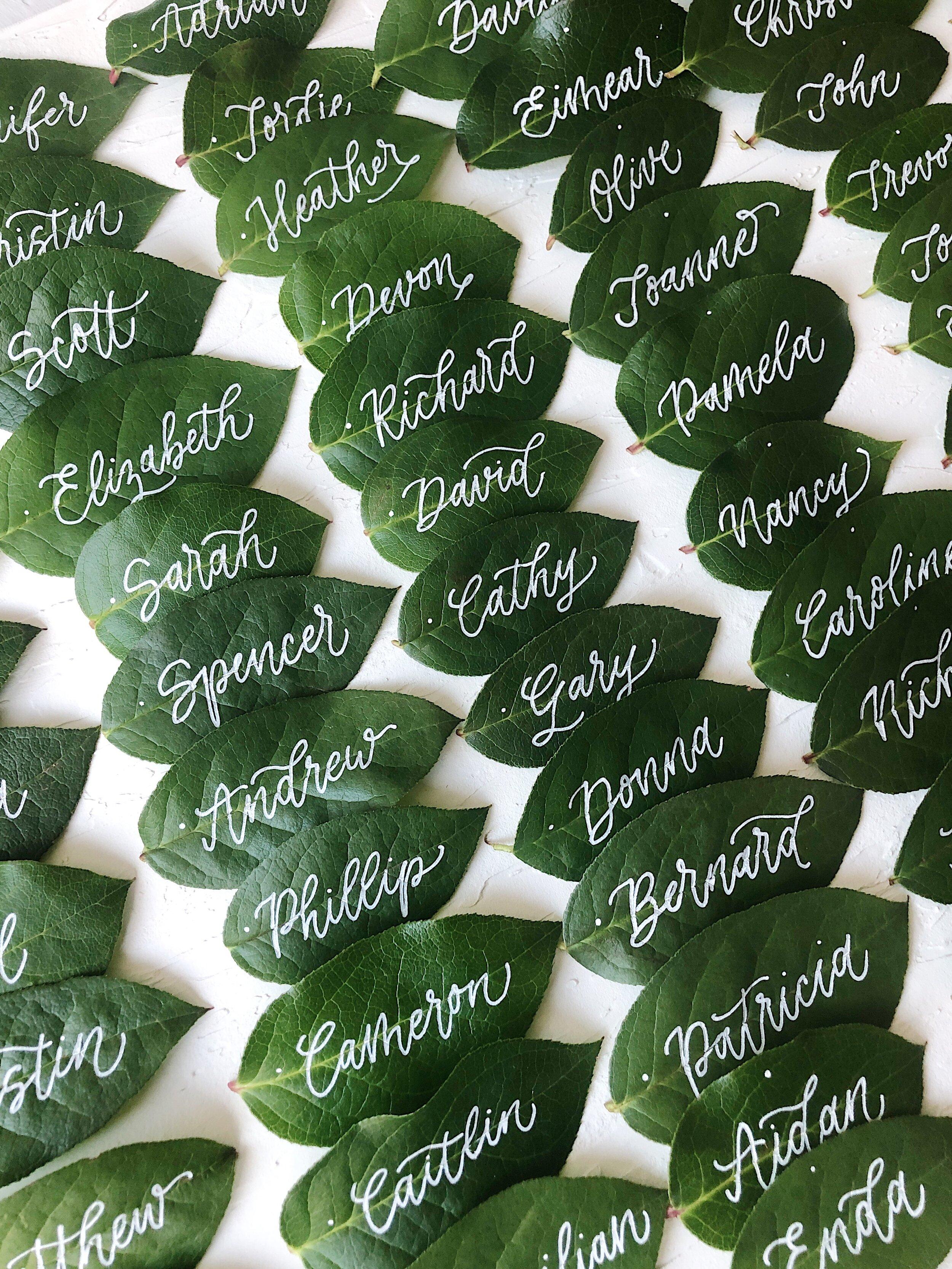 (IS) Leaf Name Cards 1.JPG