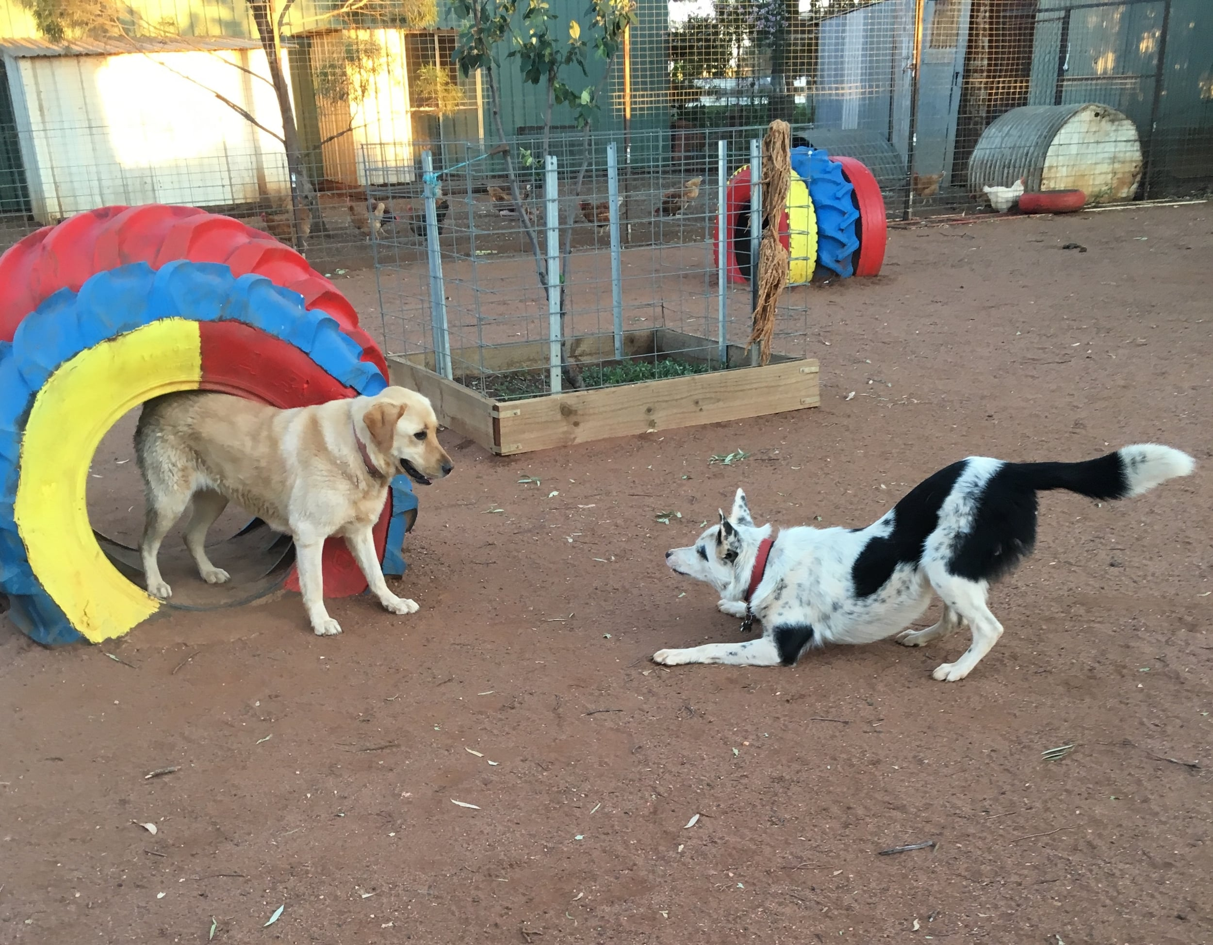 Your Pet's Home Away From Home    Doggy Daycare