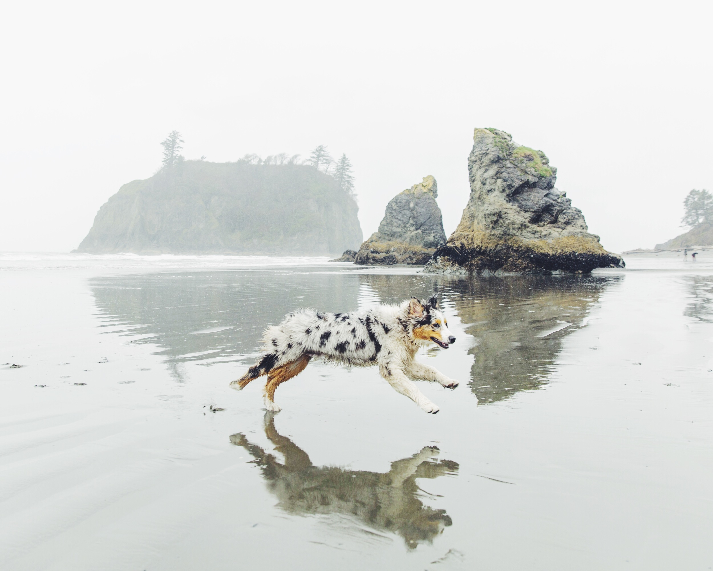 Presto Pups at Ruby Beach