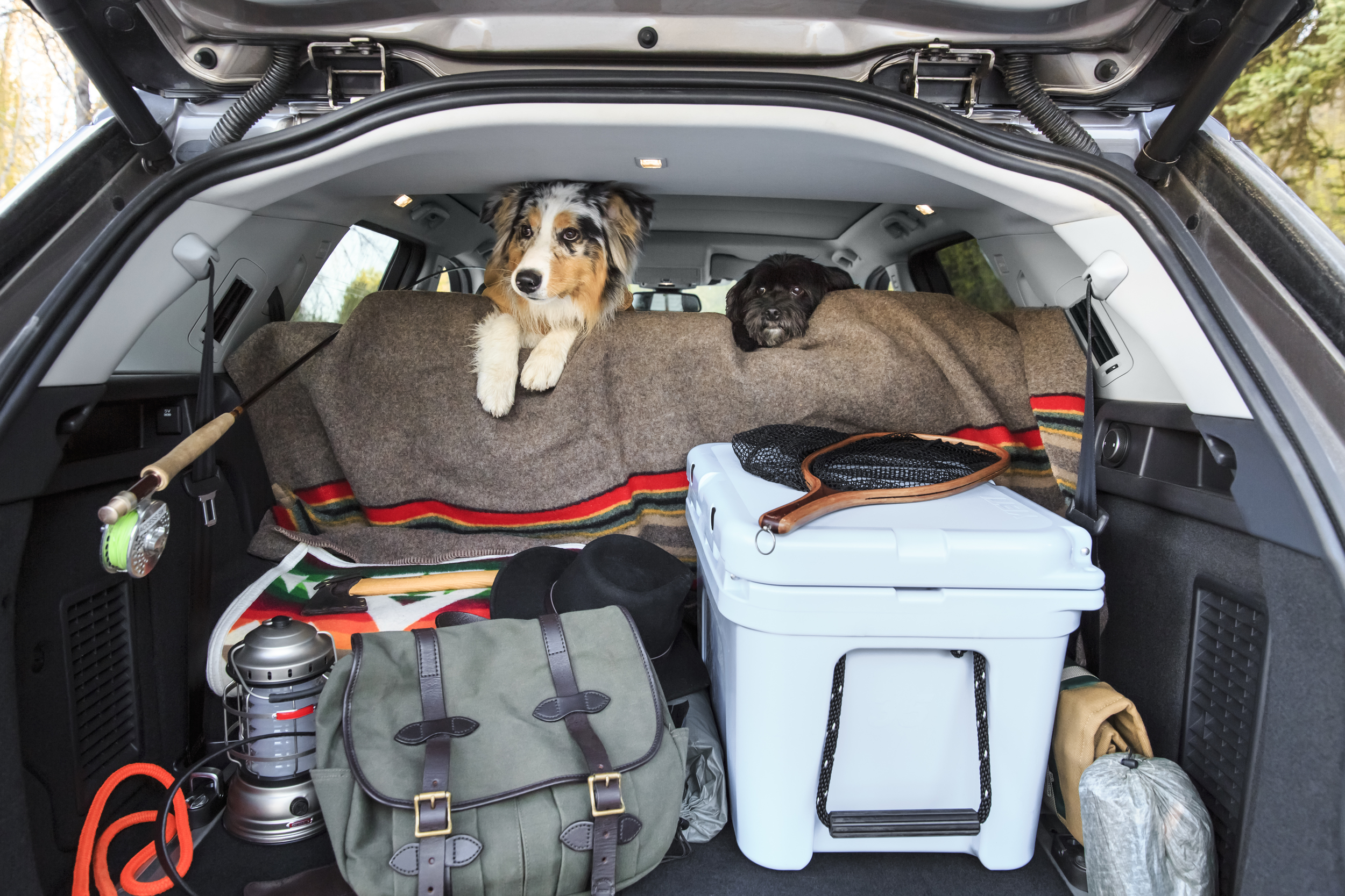 Presto Pups and Dusty to trusty dog ready to go in the back of our Land Rover during our road trip to Wyoming