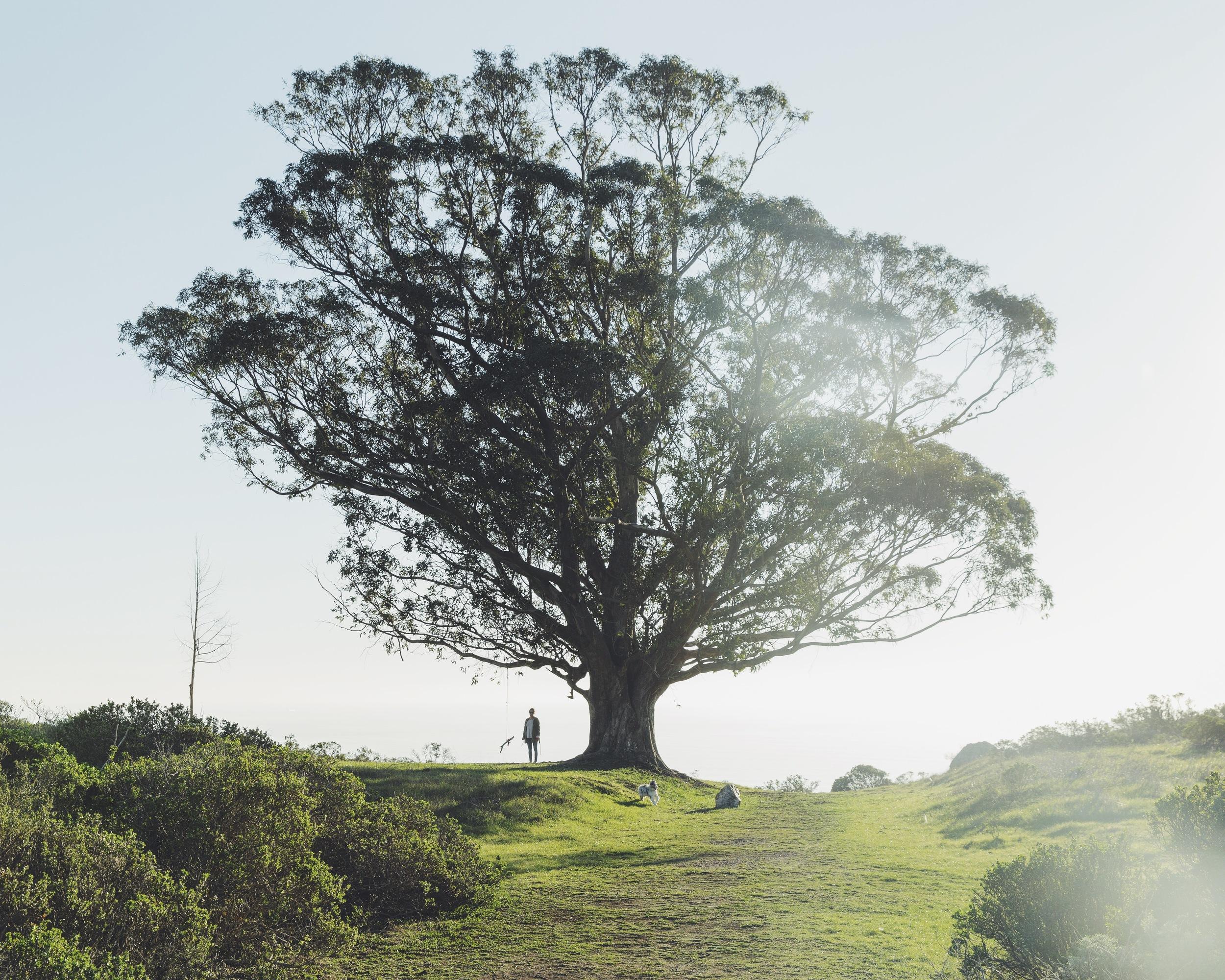 stinson beach, tree swing