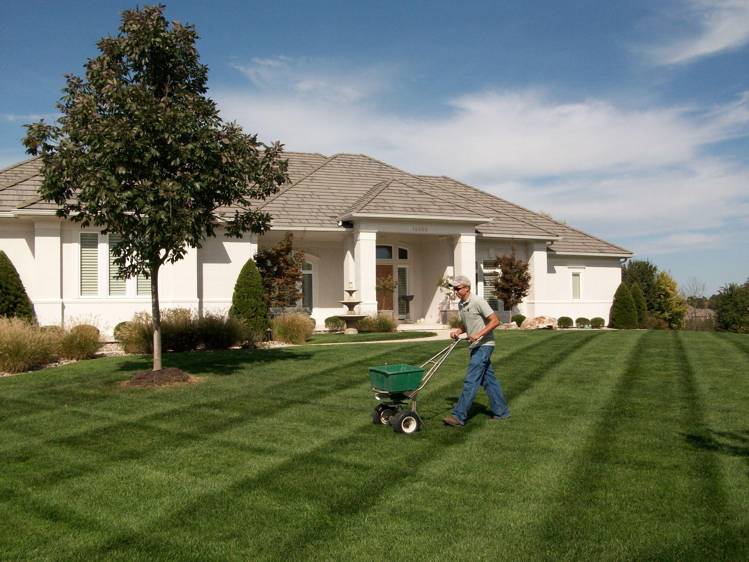 Nutrients can come from lawn fertilizer washed away by rain.