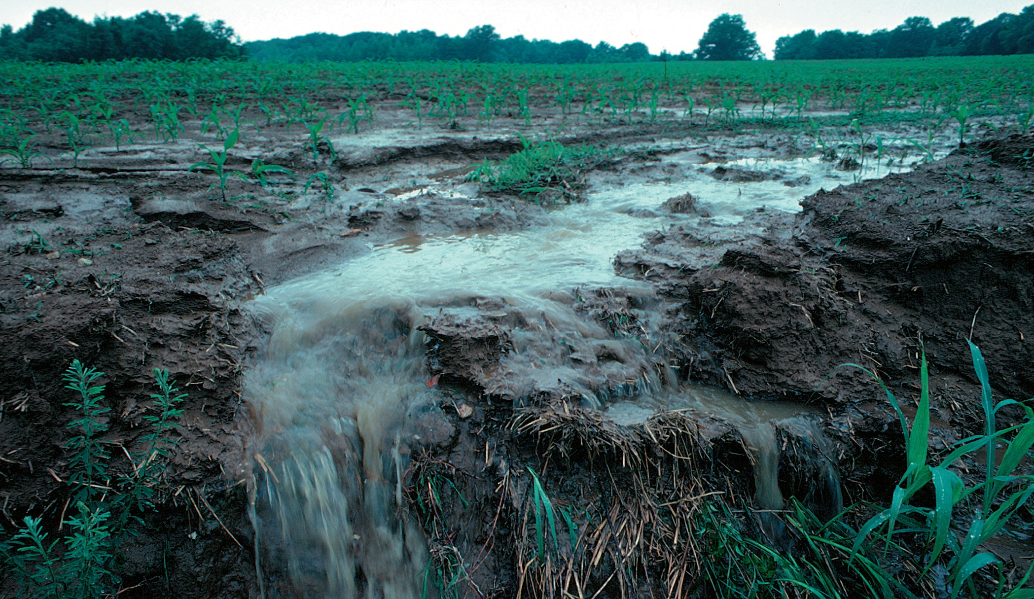 Or fertilizer wash off farmers field before crops use it to grow.