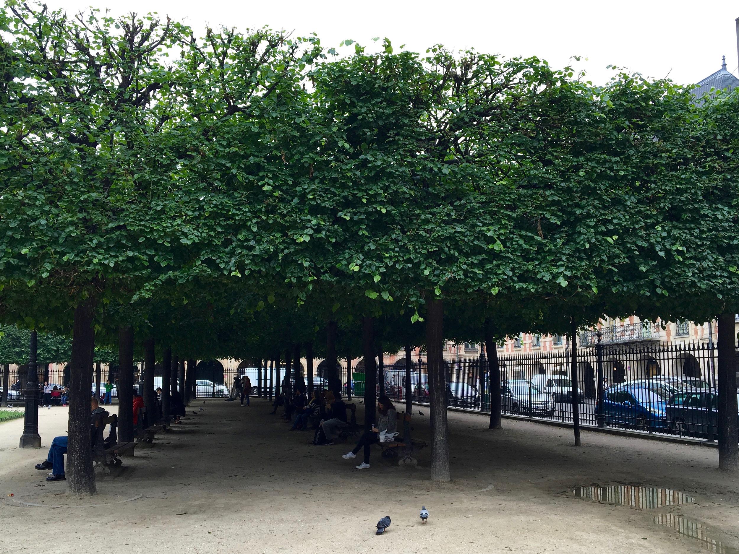 Lunching under rectangular trees