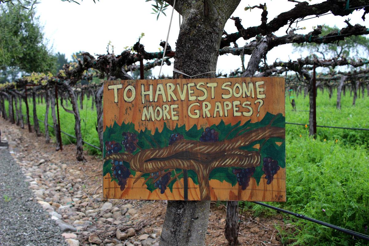 Hagafen Winery Silverado Trail Napa