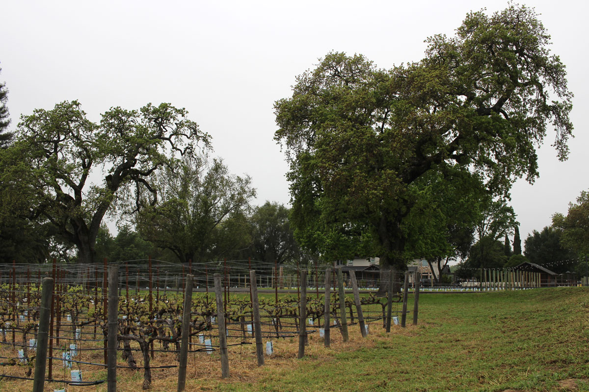 Judd's Hill Winery Napa