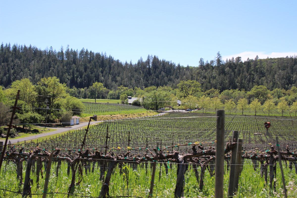 Conn Valley Winery Napa