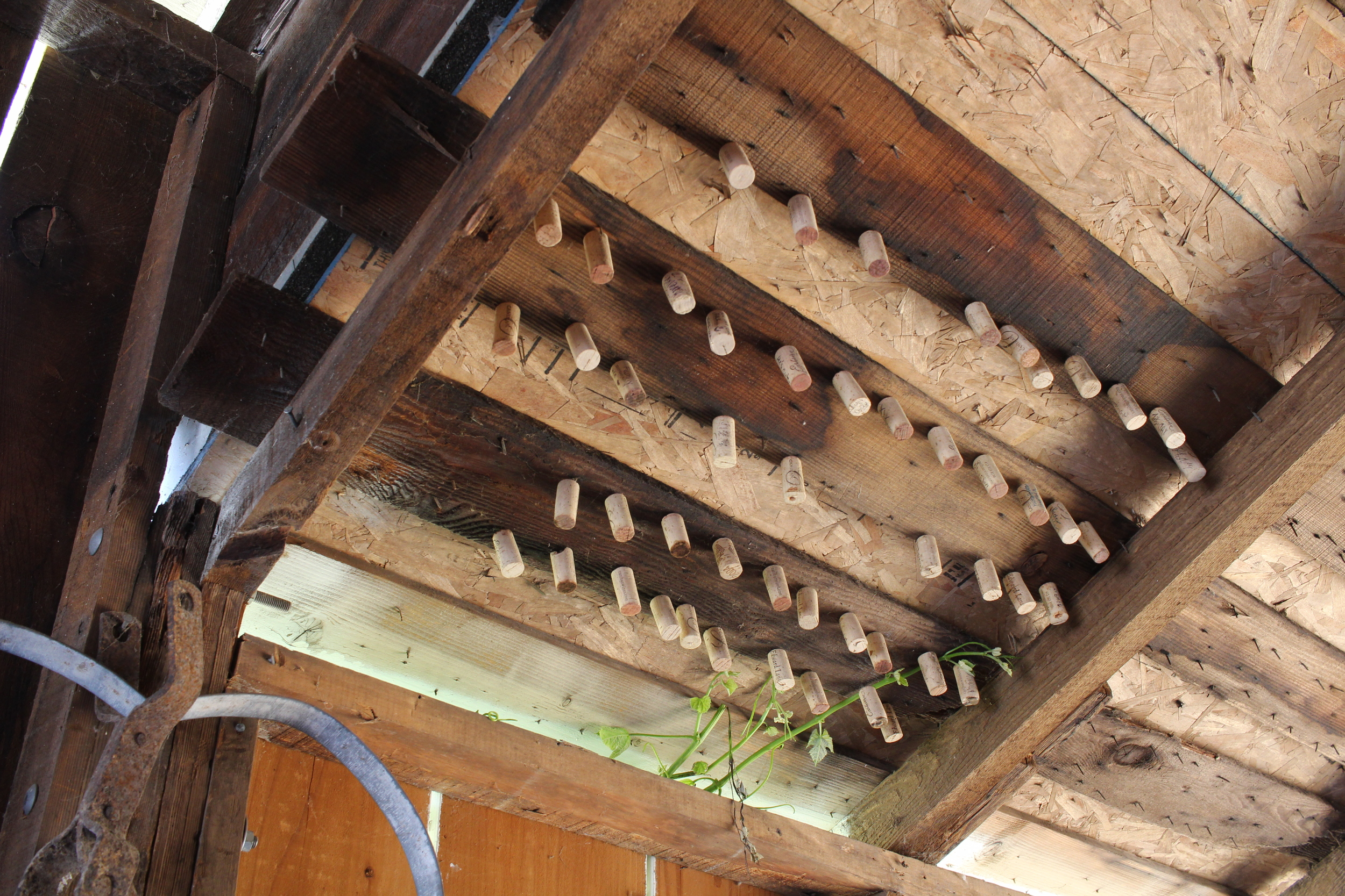 Corks hanging from the roof in the barn (Canihan Winery)