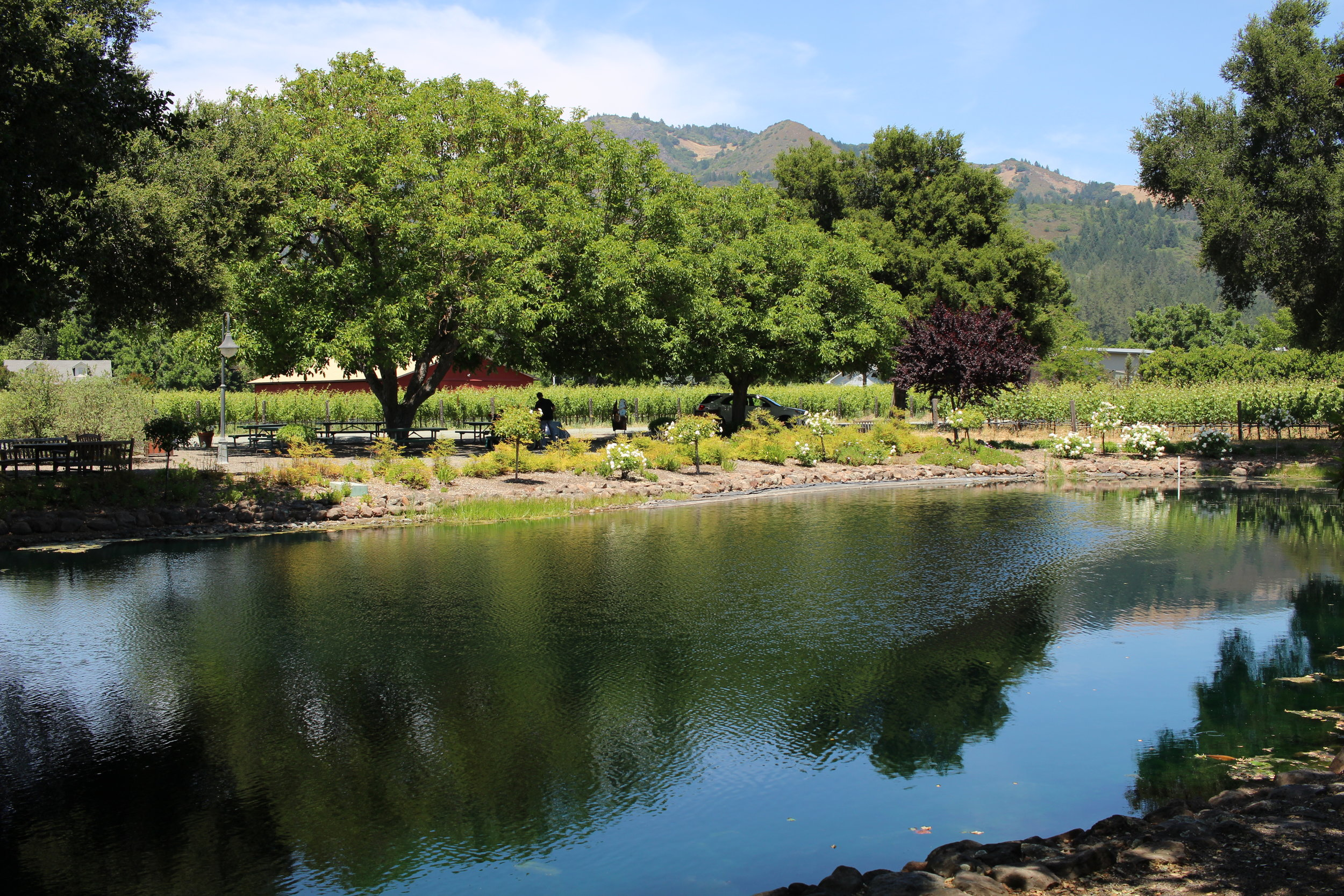 Landmark Vineyards in Sonoma