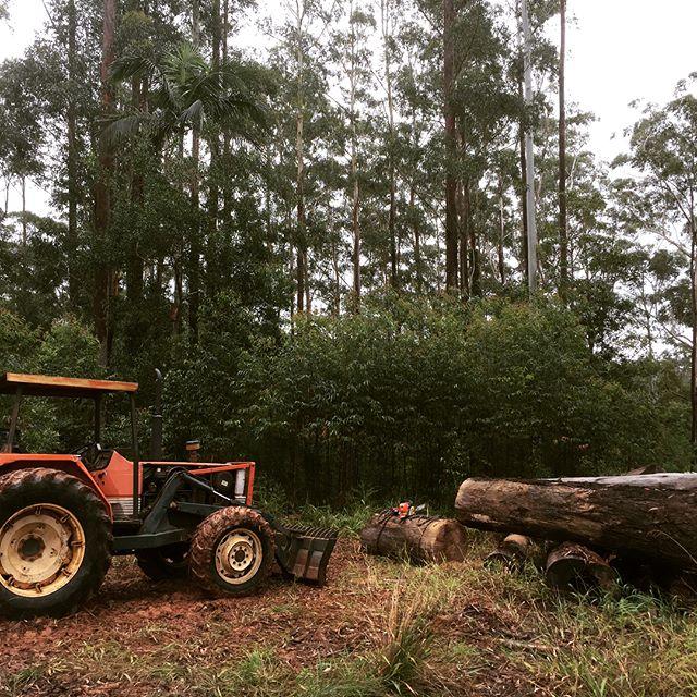 #firewood Friday... making use of some reject #blackbutt logs, keeping our butts warm! #farmlife #arakaiestate #stihl #farmboss