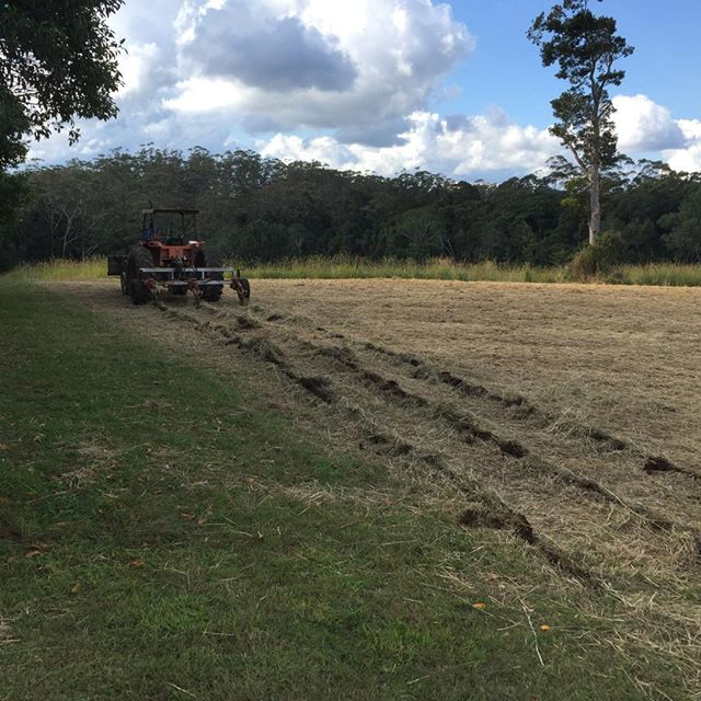 A little side project... 1/4 acre of #ginger  Part 1 - the setup.  Ground prep - deep ripping, attachment fixing (spade hoe) & building (row former), sawdust delivery, hand planting 400+kg then heavy mulching with sawdust via wheelbarrows!! #arakaiestate #farmlife #smallcrops
