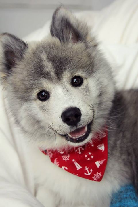 "Pomsky Puppy Says: ""Thanks, Sean.  I can't wait to start trying this.  It's great to think of our budget as a tool in our communications arsenal.  It's going to be thought-provoking and engaging to look at how we can match our budget-line naming to our core purpose and compelling messaging."""
