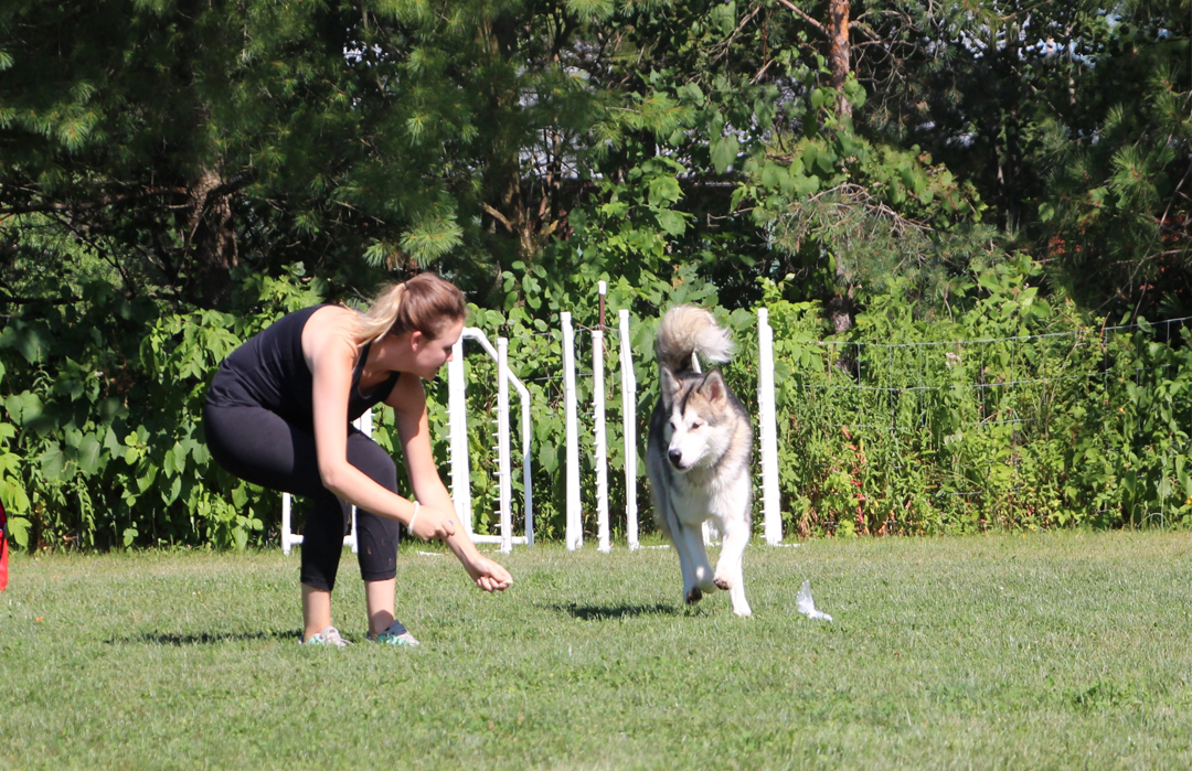 Training - The science of Positive Training is not just an effective way to teach a dog new tricks, it's the proven most effective way to support positive behaviours and strengthen the human-dog bond. Through continuing education, we ensure that our clients have access to the latest research, strategies and techniques to maximize your dog's potential.Training fees start at $95/hr with package rates & remote consultations are available.
