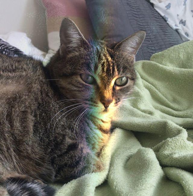 Só para deixar registrado aqui no feed que a gatinha que tava procurando uma família encontrou... A NOSSA❤️ Três meses já que a Meishu aproveita essa vida delícia de sofá e cama quentinha.