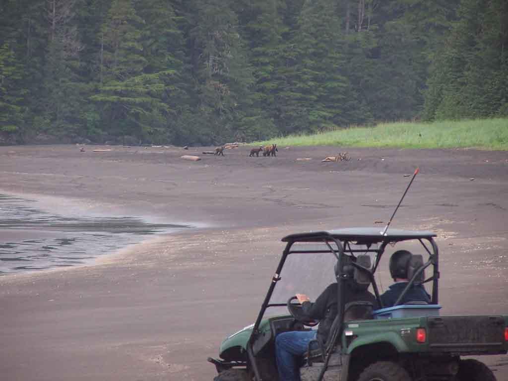 ATV Riders Share The Beach With a Bear Family
