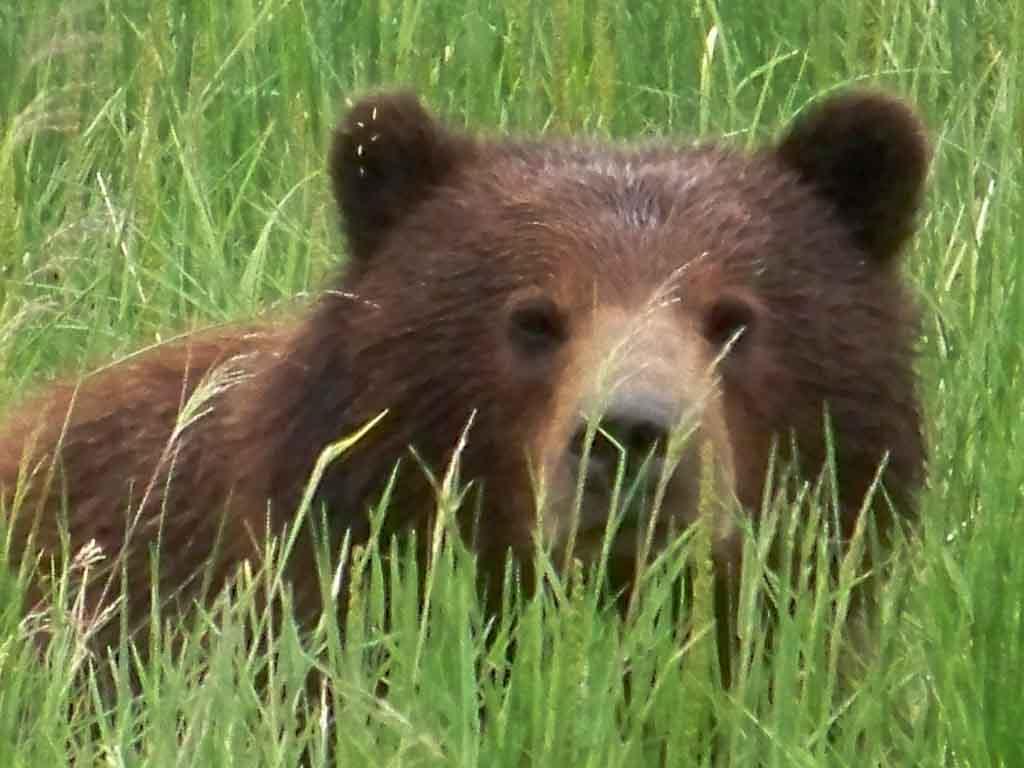 Peek a Bear