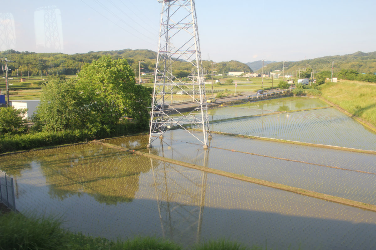 Rice paddy fields next to the train line. Every spare centimetre is used - even under the high tension wires.