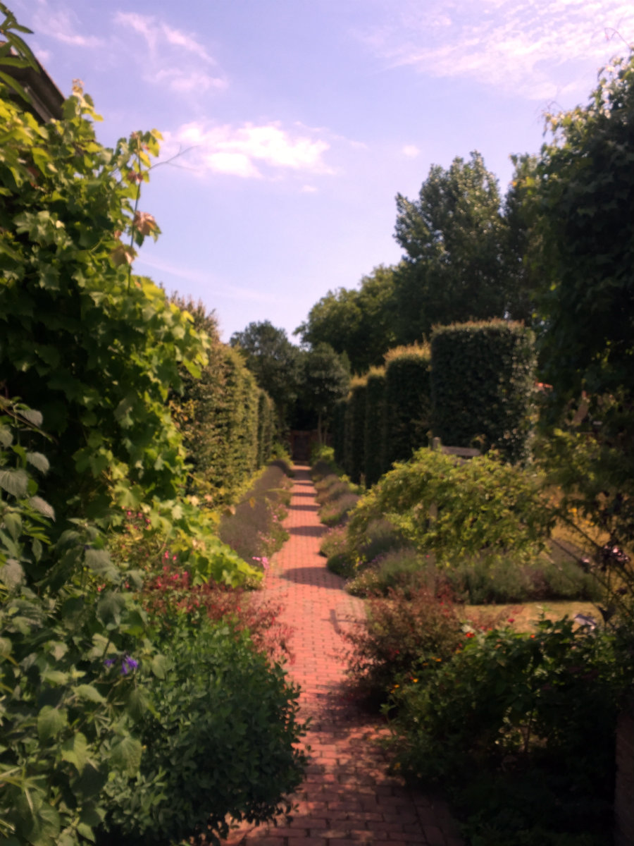 A glimpse of the Secret Garden at Salutation House