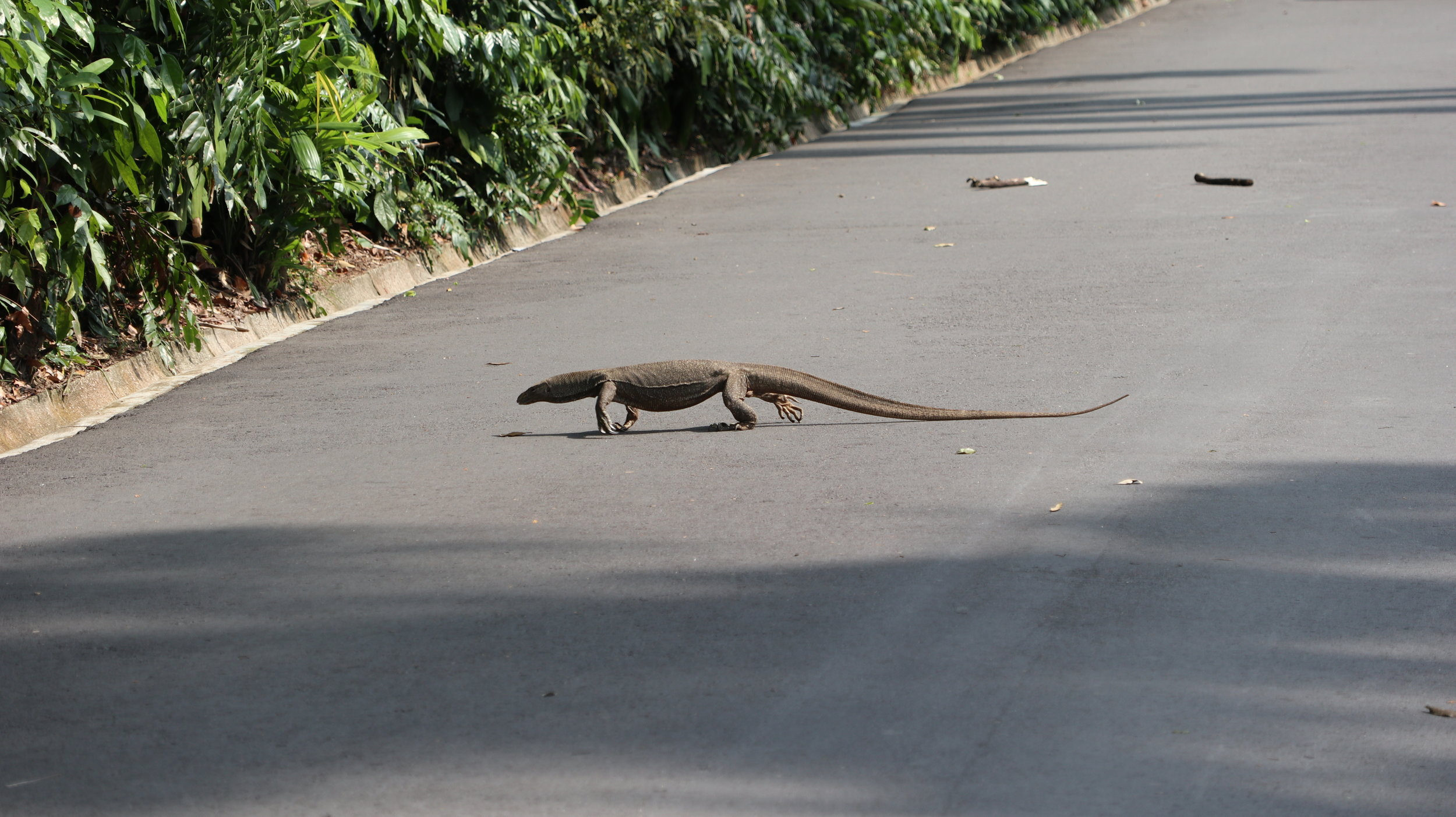 We gave this guy right-of-way at the Botanic Gardens