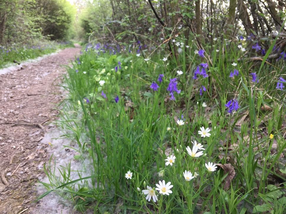 Burgeoning Spring in Brampton Wood.
