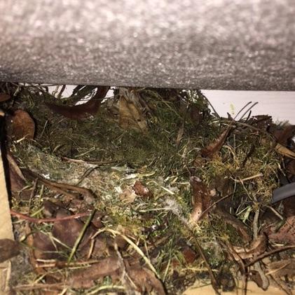 robins nest.jpg