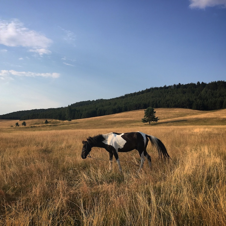 walking in zlatibor 3.jpg
