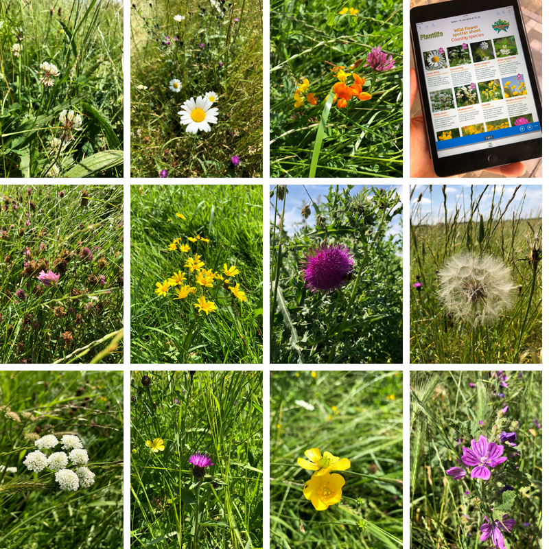 30 days wild wild flower meadow