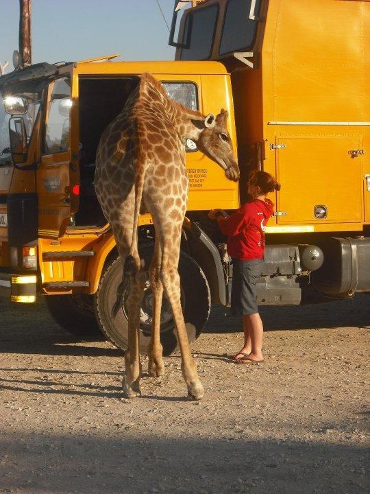 adventure travel outdoors wellbeing Giraffe 1.jpg