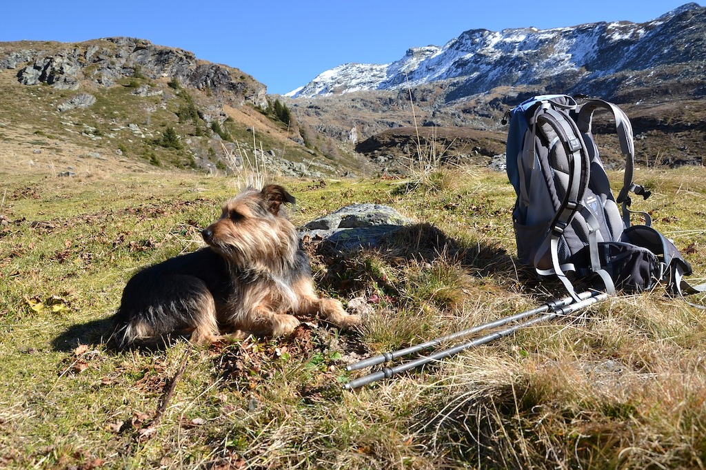 hiking with a dog walking mountains trekking dogs long distance.jpg