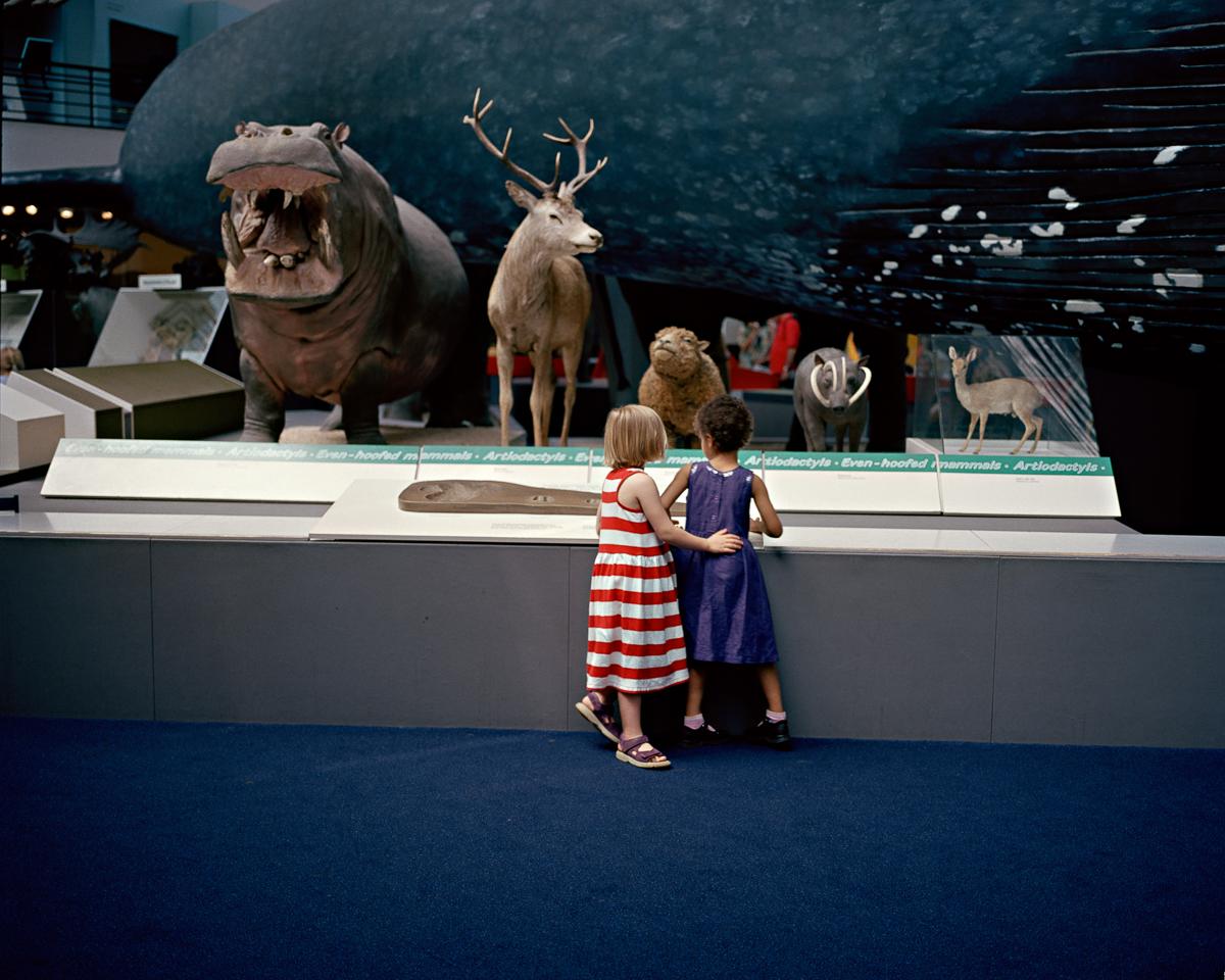 Natural History, 2004