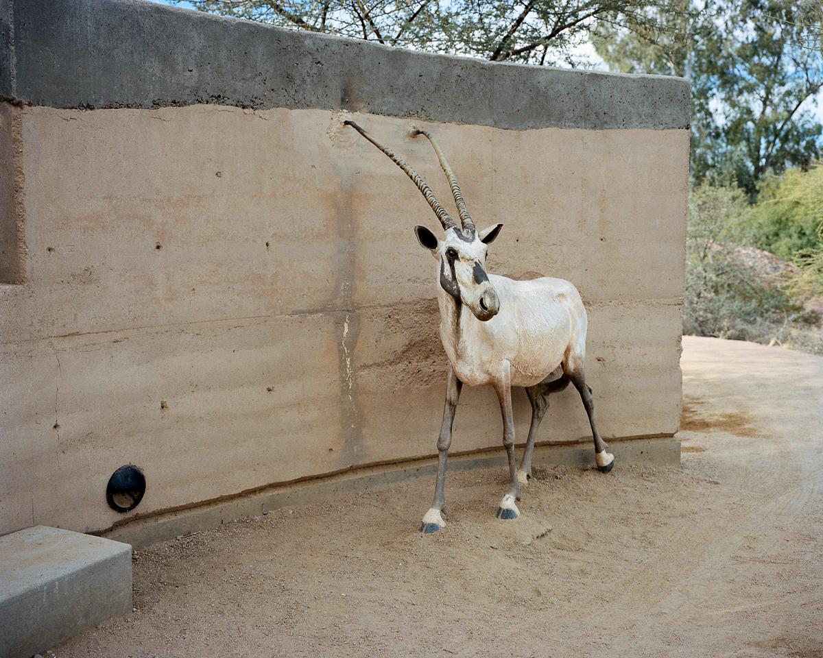 Antelope, 2008