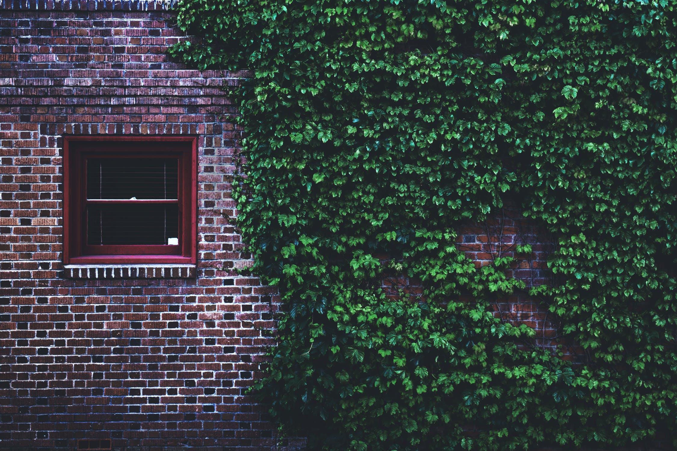 pexels-photo-1171384.jpeg