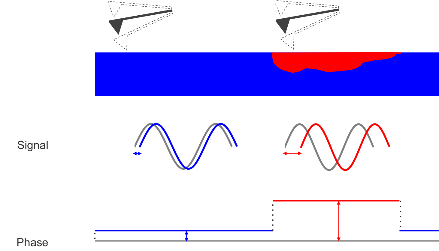 The red and blue components possess different mechanical properties, which results in a different phase shift.