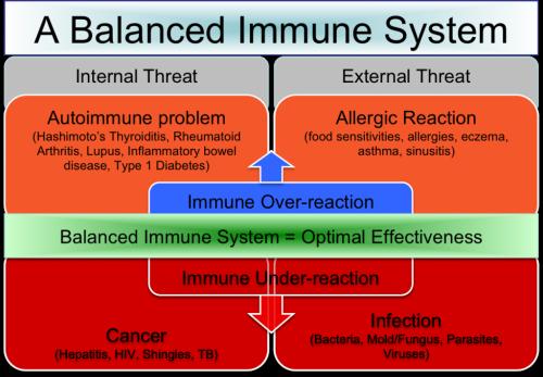 balanced-immune-system-1024x712-500x347.png