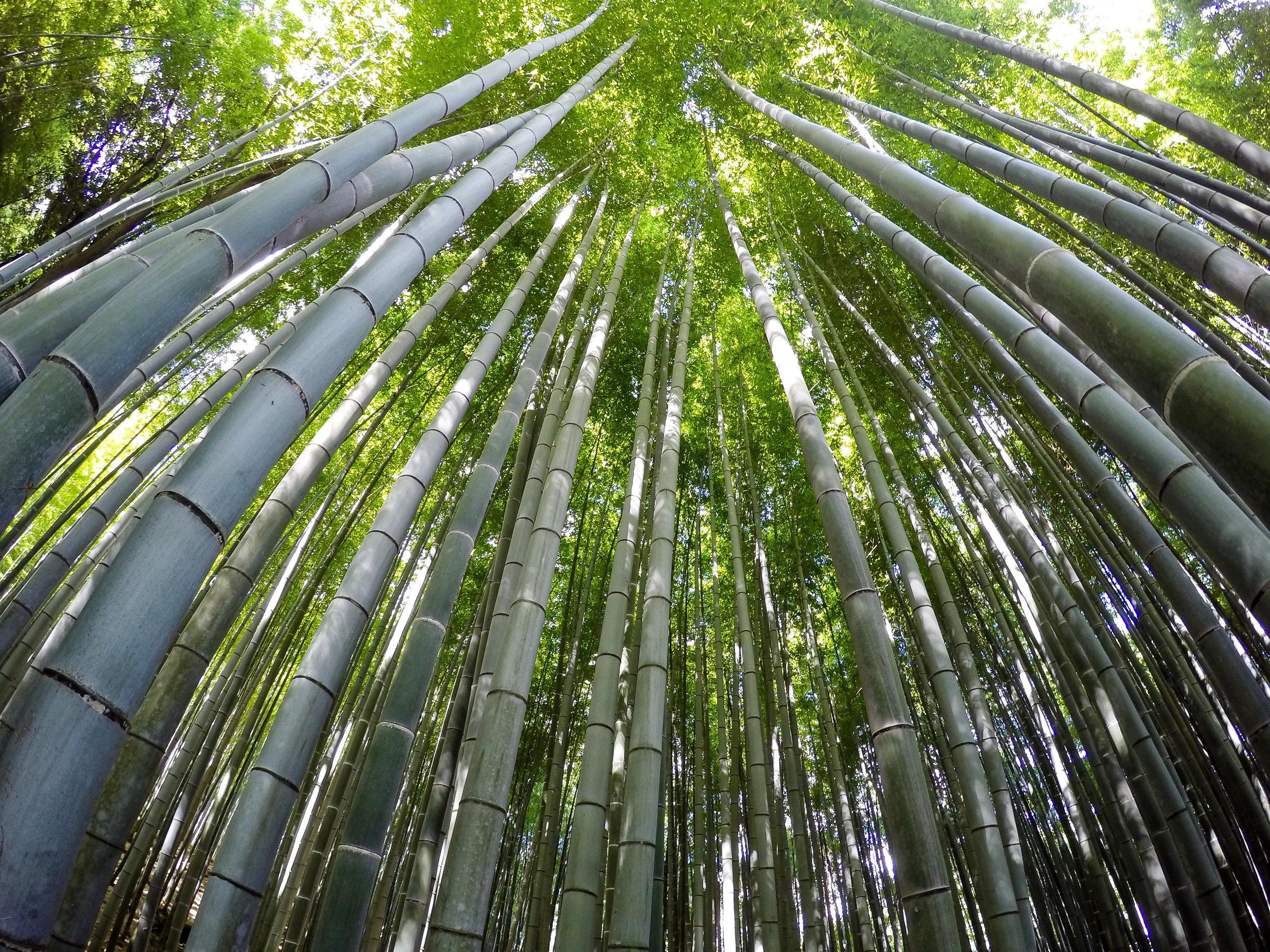 Arashiyama Bamboo Forest, Kyoto, Japan, East Asia | DoLessGetMoreDone.com |
