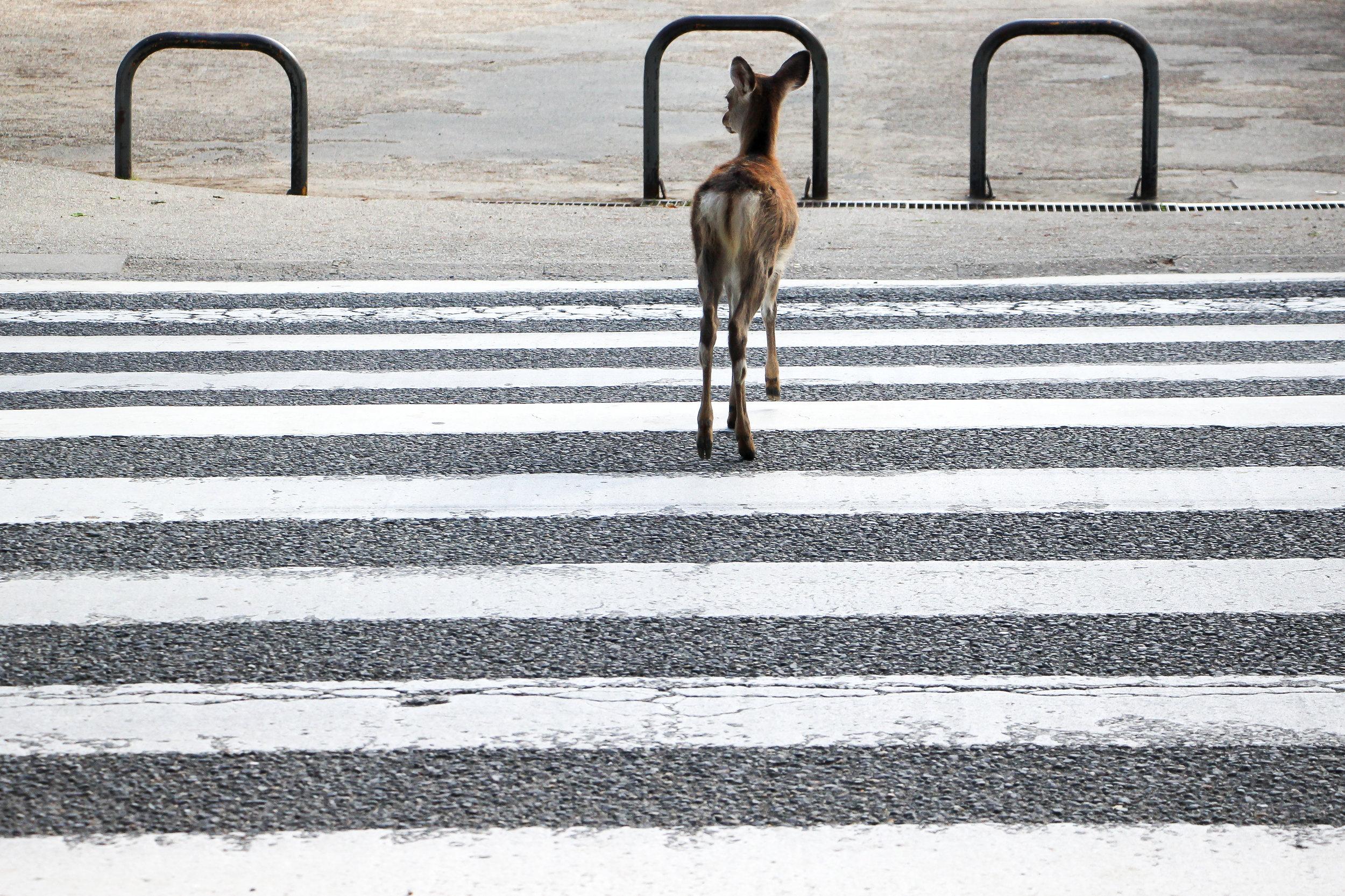 Nara Park, Nara, Japan, Asia   DoLessGetMoreDone.com   Where Do You Feel Right At Home?