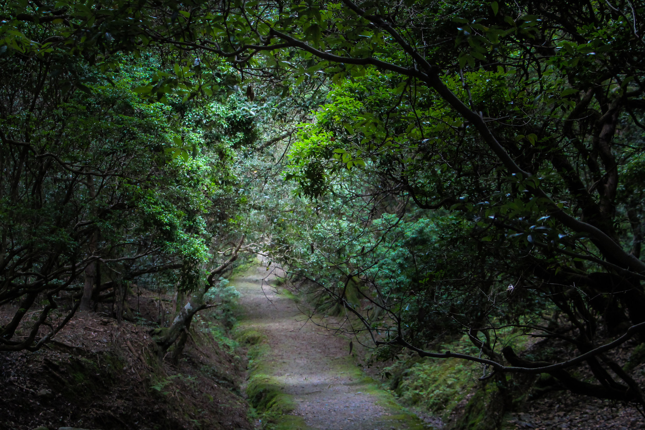Kasugayama Forest, Nara, Japan, Asia | DoLessGetMoreDone.com | Where Do You Feel Right At Home?
