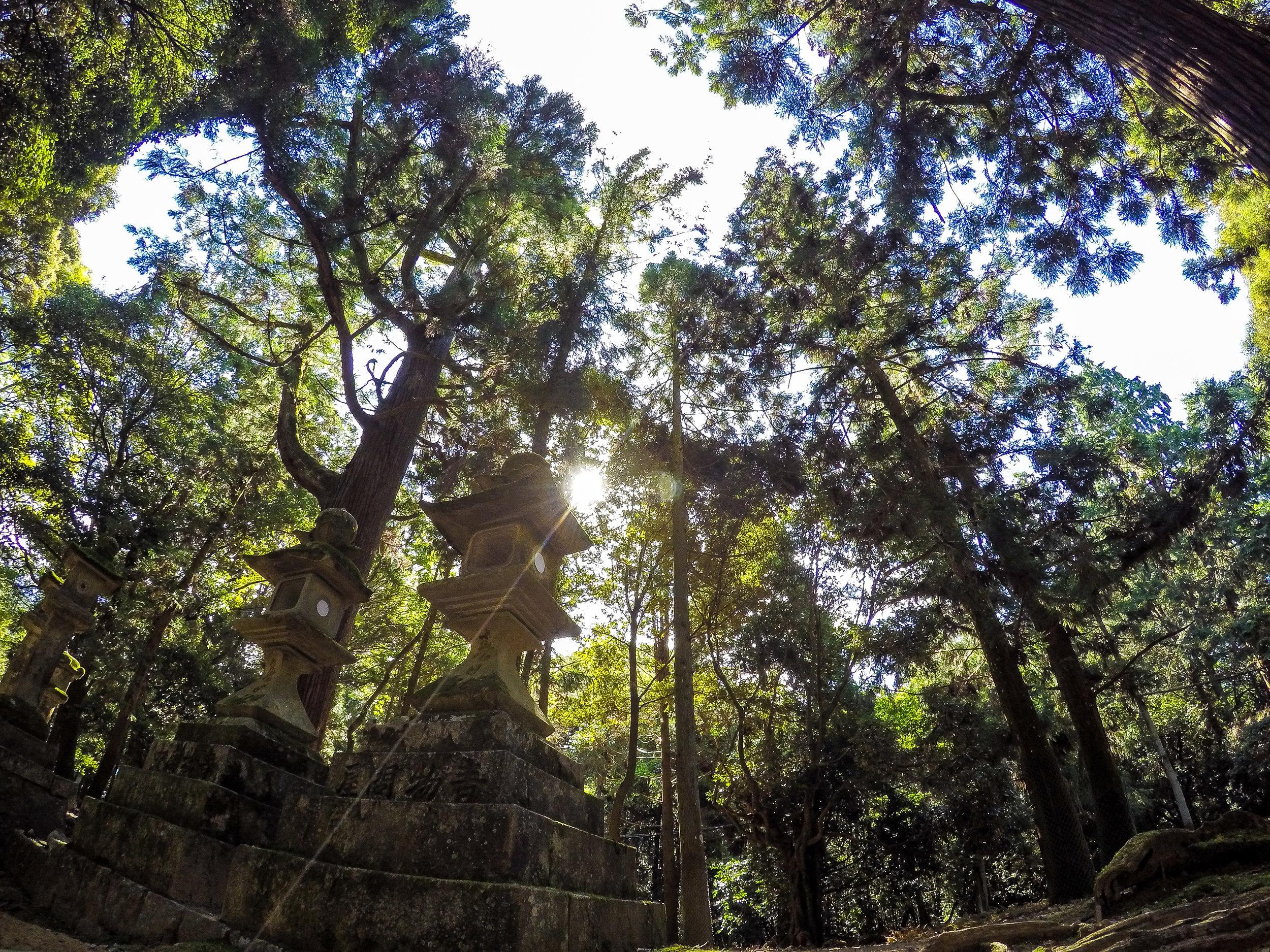 torii gate and stone lanterns, Nara, Japan, Asia   DoLessGetMoreDone.com   Where Do You Feel Right At Home?