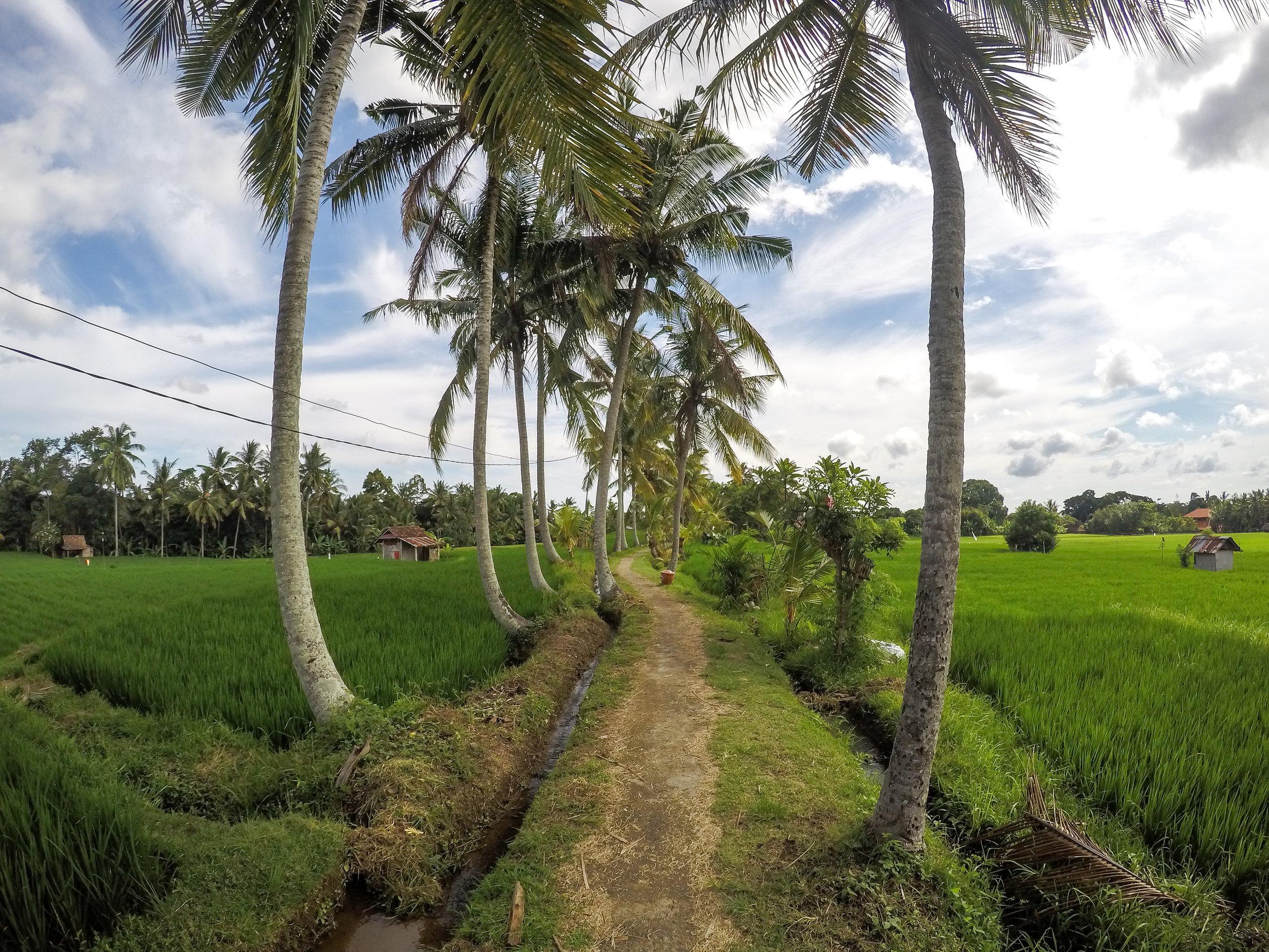 Ubud, Gianyar, Bali, Asia | DoLessGetMoreDone.com |