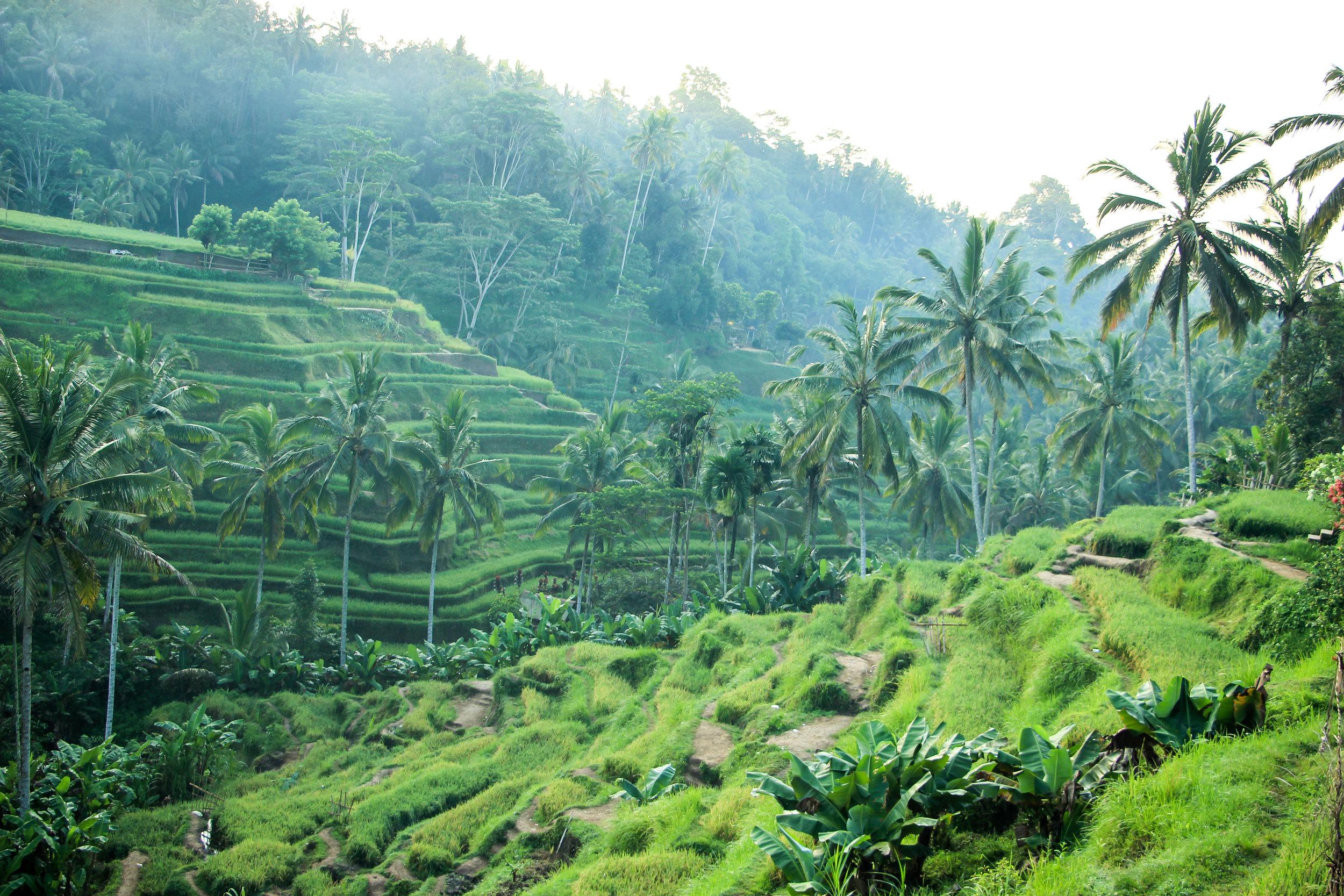 Tegallalang Rice Terrace, Bali, Asia | DoLessGetMoreDone.com |