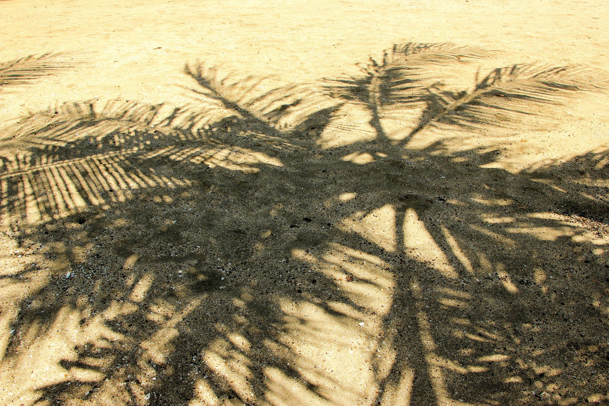 Palm tree, shadow, Bali, Indonesia, Asia | DoLessGetMoreDone.com |