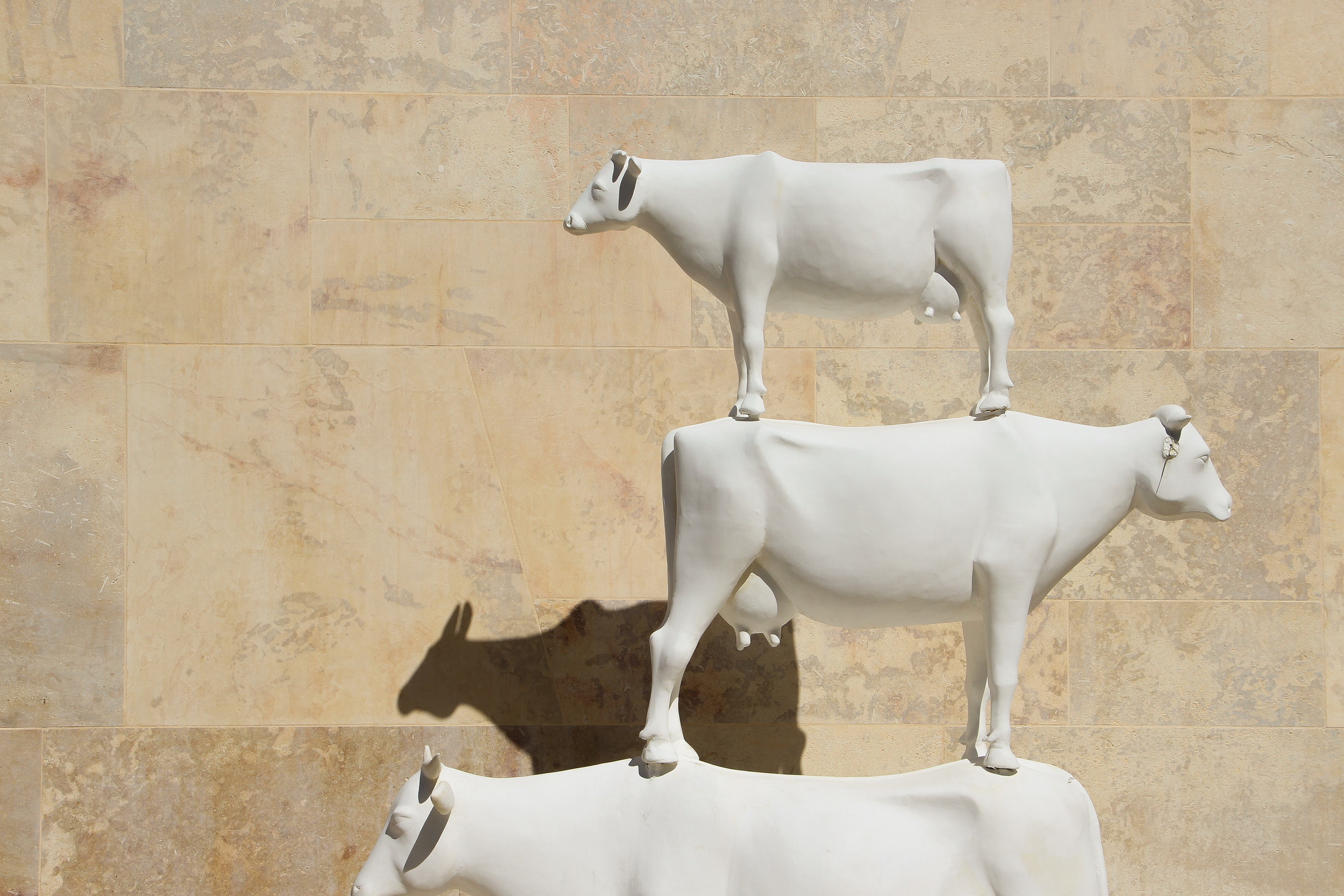 Friends with Vegans A sculpture of three cows   Public Art Installation   Old Town of Valletta   - Thinking about appreciation for quality in Malta   Malta, Europe   DoLessGetMoreDone.com   - Canon Minimal Travel Documentary Photography - search for liveability   Sustainability