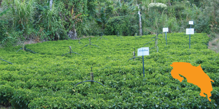 Coffee nursery at La Lia; across their farms, they produce an incredible number of coffee varieties. Currently they grow Villasarchi, Caturra, Catuai, Typica & Red Bourbon. In the nursery, they have started Geisha, SL28, Ethiopia 49, Yellow & Red Pacamara, Orange & Pink Bourbon, and Ovata.