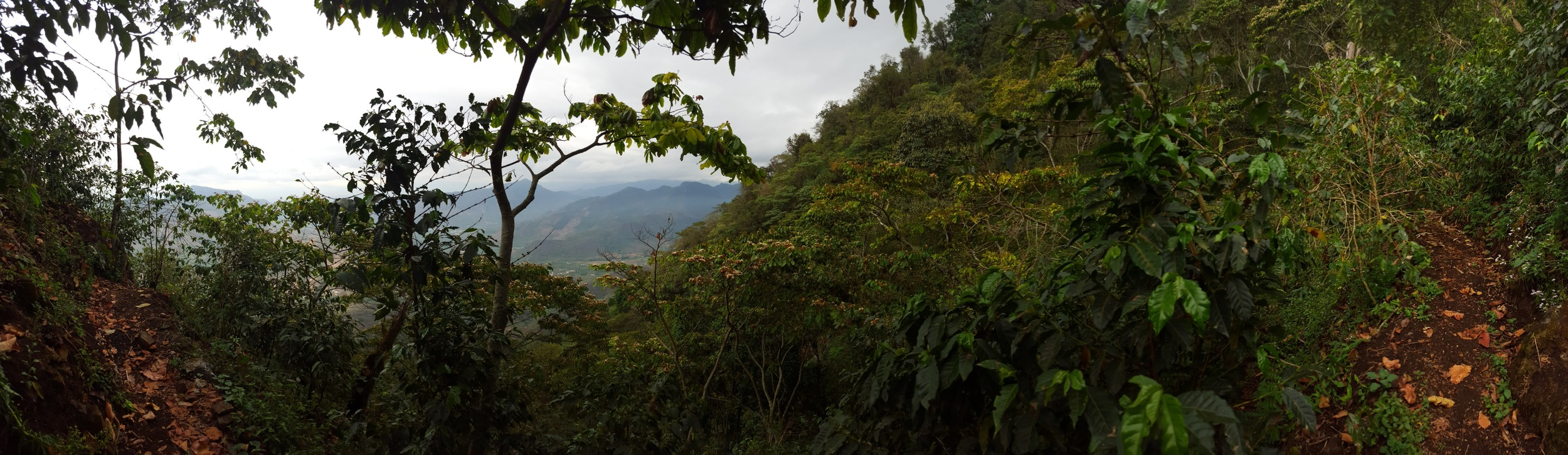 View from the trail to Buena Esperanza, looking down the mountain.