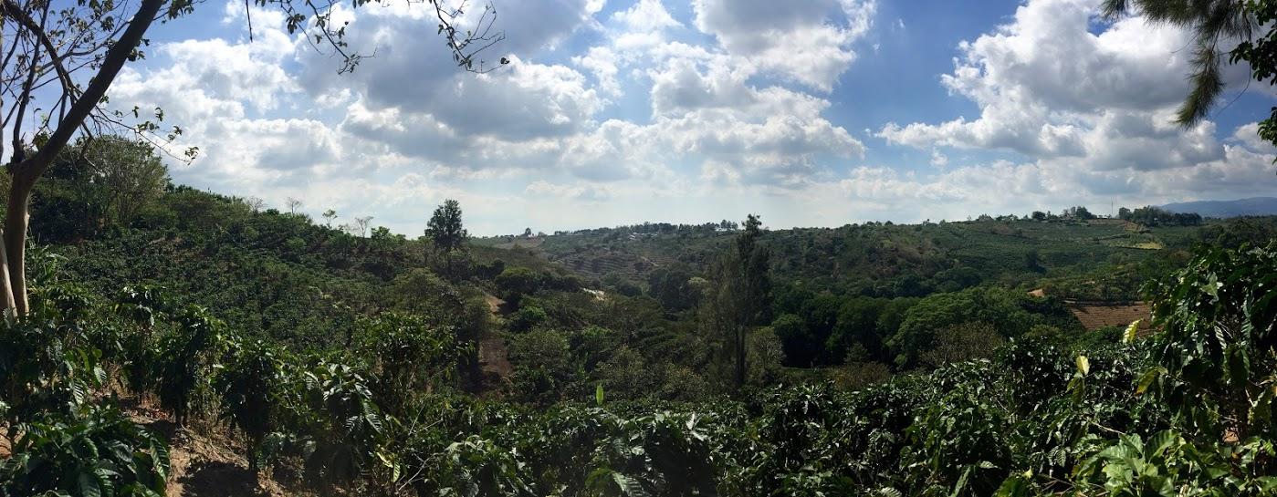 View down the farm at Finca El Quizarra.