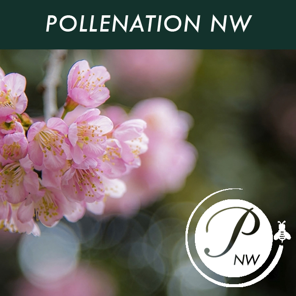 Pollenation NW