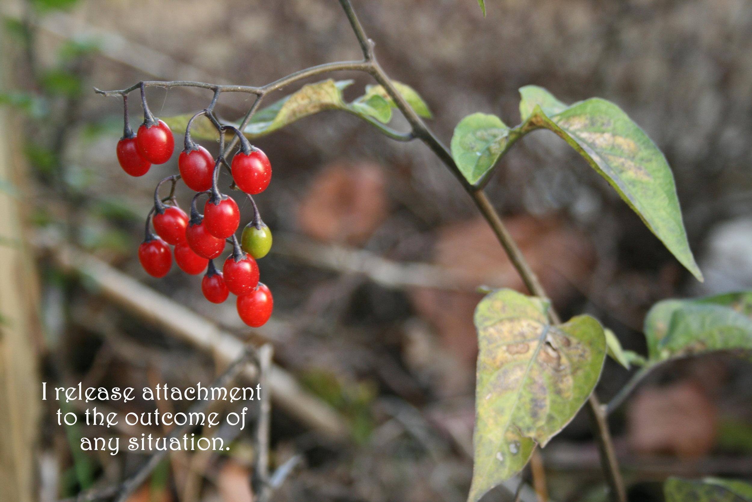 Berries_release attachment.jpg