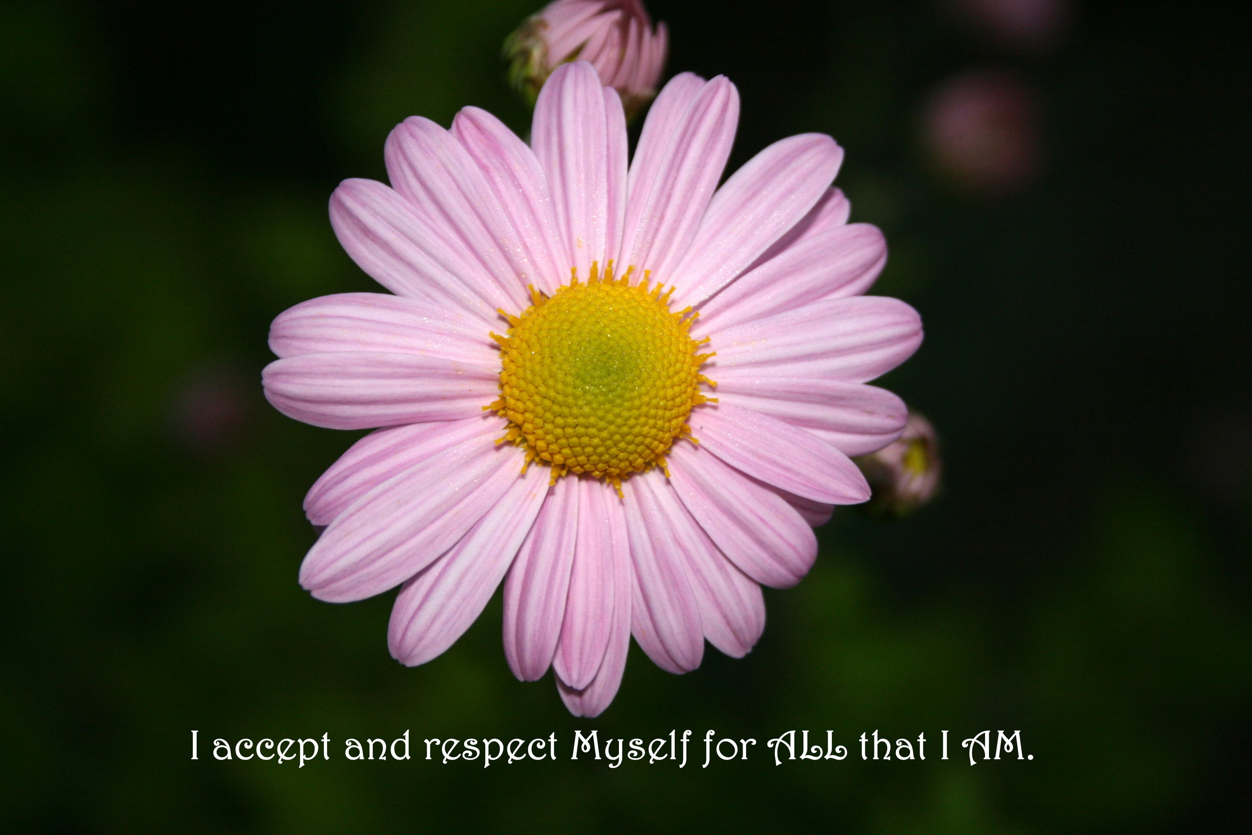 Daisy_Accept and Respect.jpg
