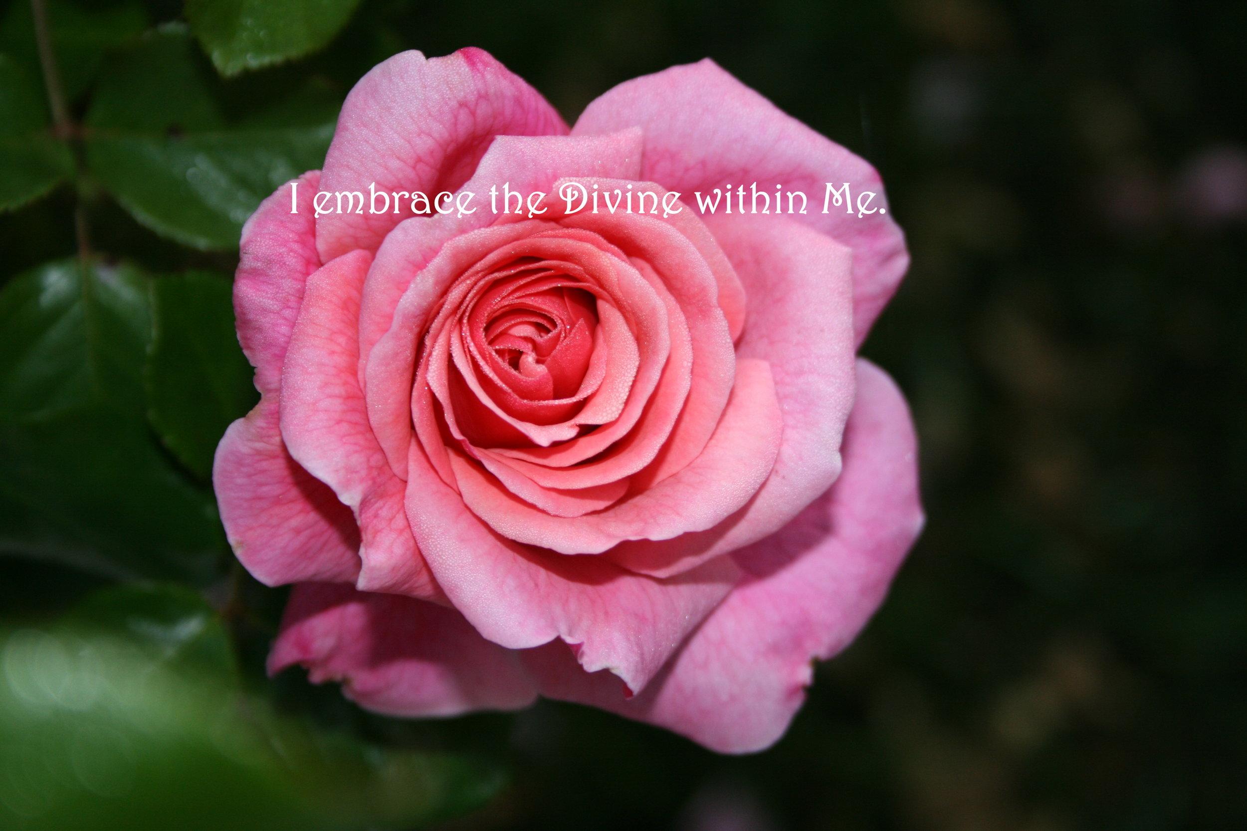 Pink Rose_Embrace the Divine.jpg